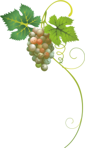 Szőlő - borverseny